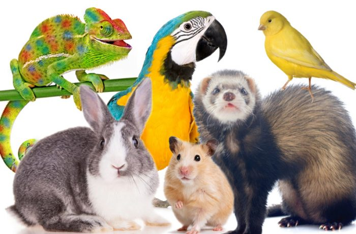 best exotic pets and animals