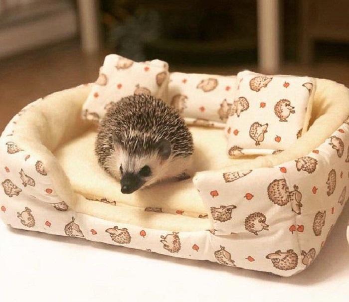 hedgehog accesories