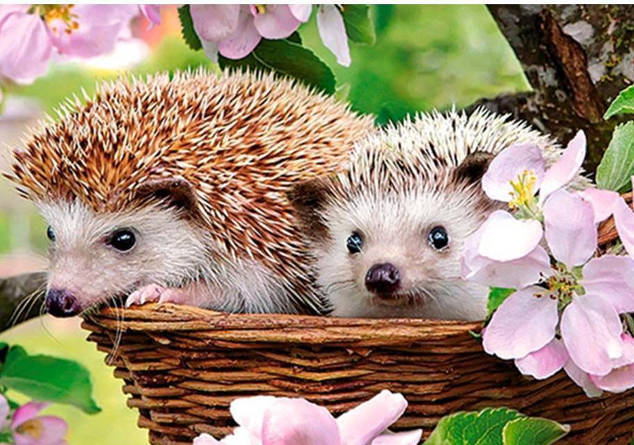 hedgehog exotic pets