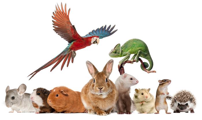 online pets shop