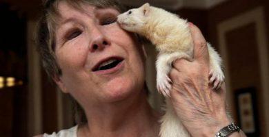 ferrets good pets