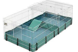 Choosing A Guinea Pig Cage