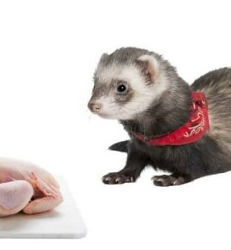 best diet for a ferret