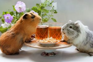 Which Guinea Pig Food is Best